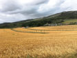 Parkhill, where Roger Howison is planting barley and apple trees together.