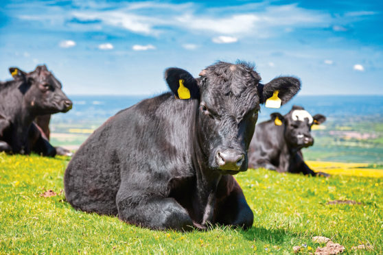 The ScotEID database will bring together all farm livestock movements.