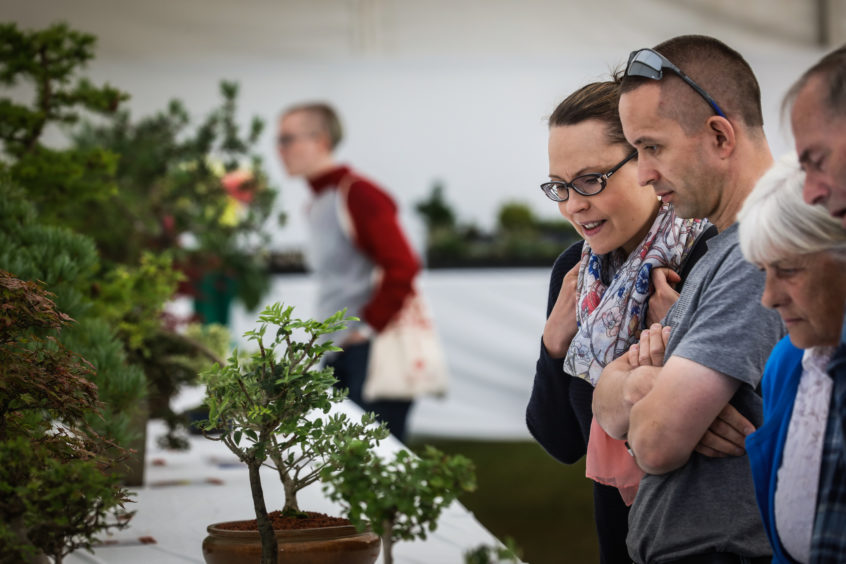 The public admire the bonsai trees that have been submitted for judging on Saturday at the 2019 Dundee Flower and Food Festival.