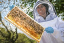 Gayle goes beekeeping with Meik Molitor of Webster Honey.