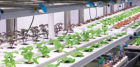 A variety of lighting and water-cooling systems are being developed by  Liberty Produce.