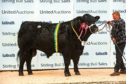 Overall champion in the Aberdeen-Angus contest was Blelack Dakota.