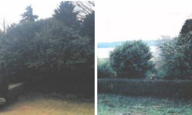 The hedge in question, before and after.