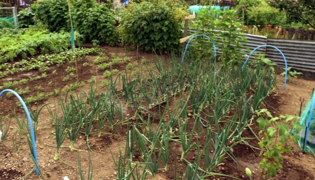Seeds have been sowed for new allotments in Inverkeithing.