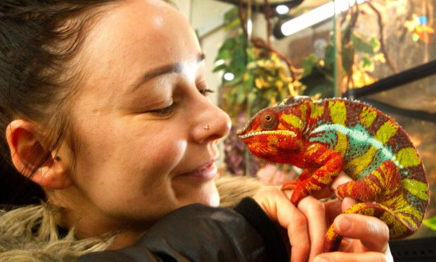 Shopper Lianne Lloyd from Arbroath with one of Laura Christie's reptiles, Verdi.