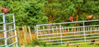 Large numbers of pheasants can be a nuisance if they encroach on to the let farm.