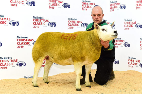 The Texel champion from Graham Morrison sold for 4000gns