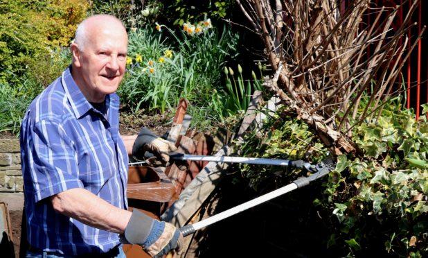 Cutting back the outdoor fuchsia