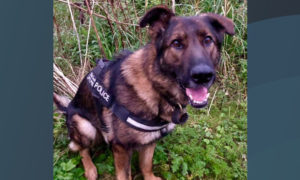 PD Indy after a rescue in Kirkcaldy in September.