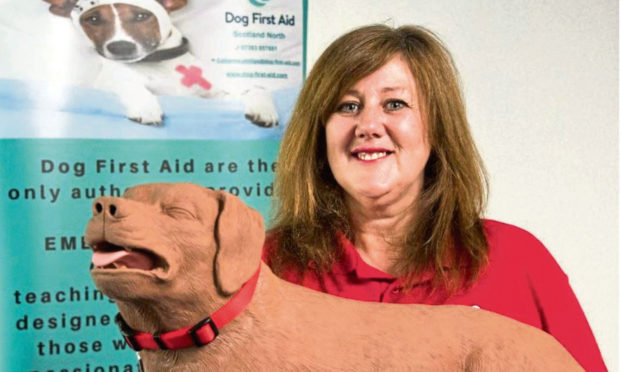 Dog first aid courses to be offered to owners in Tayside and Fife - The Courier
