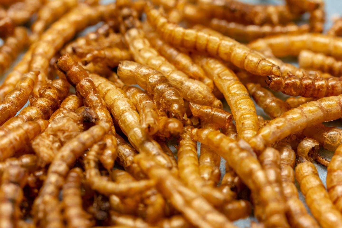 EU approves project to put mealworms on the menuDCT Media Logo